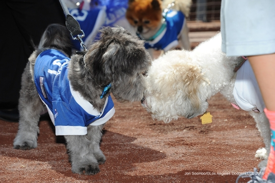 Pups at the Park before game against the San Diego Padres  Saturday, July 9, 2016 at Dodger Stadium in Los Angeles, California. Photo by Jon SooHoo/©Los Angeles Dodgers,LLC 2016
