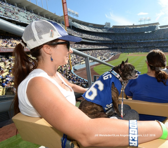Fans soak up the sun with their dogs in the outfield. Jill Weisleder/LA Dodgers
