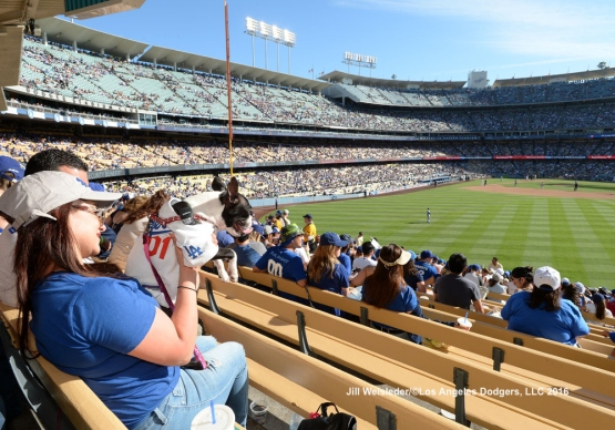 Fans and their dogs watch the game from the outfield. Jill Weisleder/LA Dodgers
