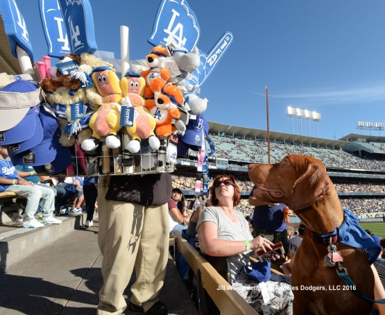 A dog has his eye on a stuffed toy Dodger dog. Jill Weisleder/LA Dodgers