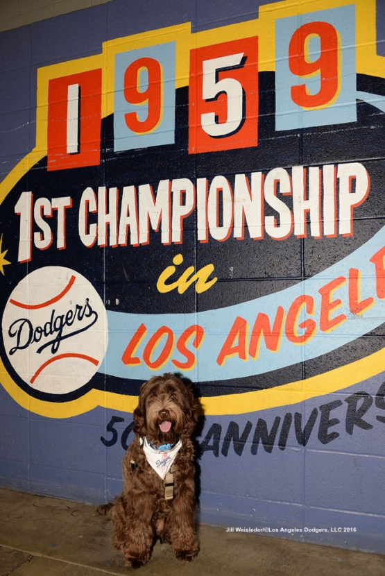A lone Dodger dog fan poses for a photo underneath the pavilion section. Jill Weisleder/LA Dodgers