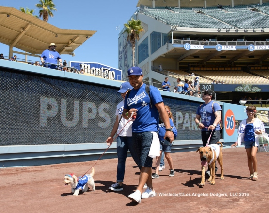 The Dodgers play host to Pups at the Park at Dodger Stadium. Jill Weisleder/LA Dodgers